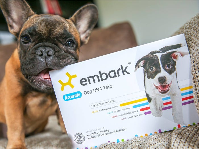 Business Insider : Embark Dog DNA - How it's work and what you'll learn