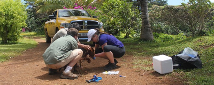 From Catching Feral Dogs, to a $6.3M Seed — Embark Vet's Funding Story.